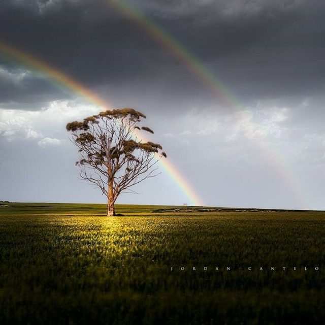 The Wheatbelt region of Western Australia is one of hugehellip